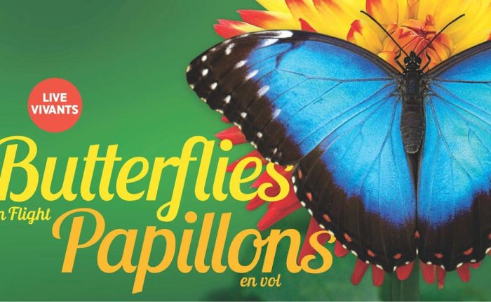 Exploring Exhibits: Butterflies in Flight at the Canadian Museum of Nature